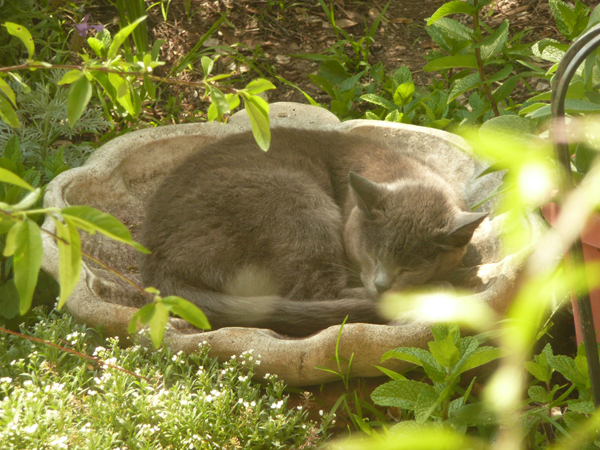 Kitty in the Birdbath